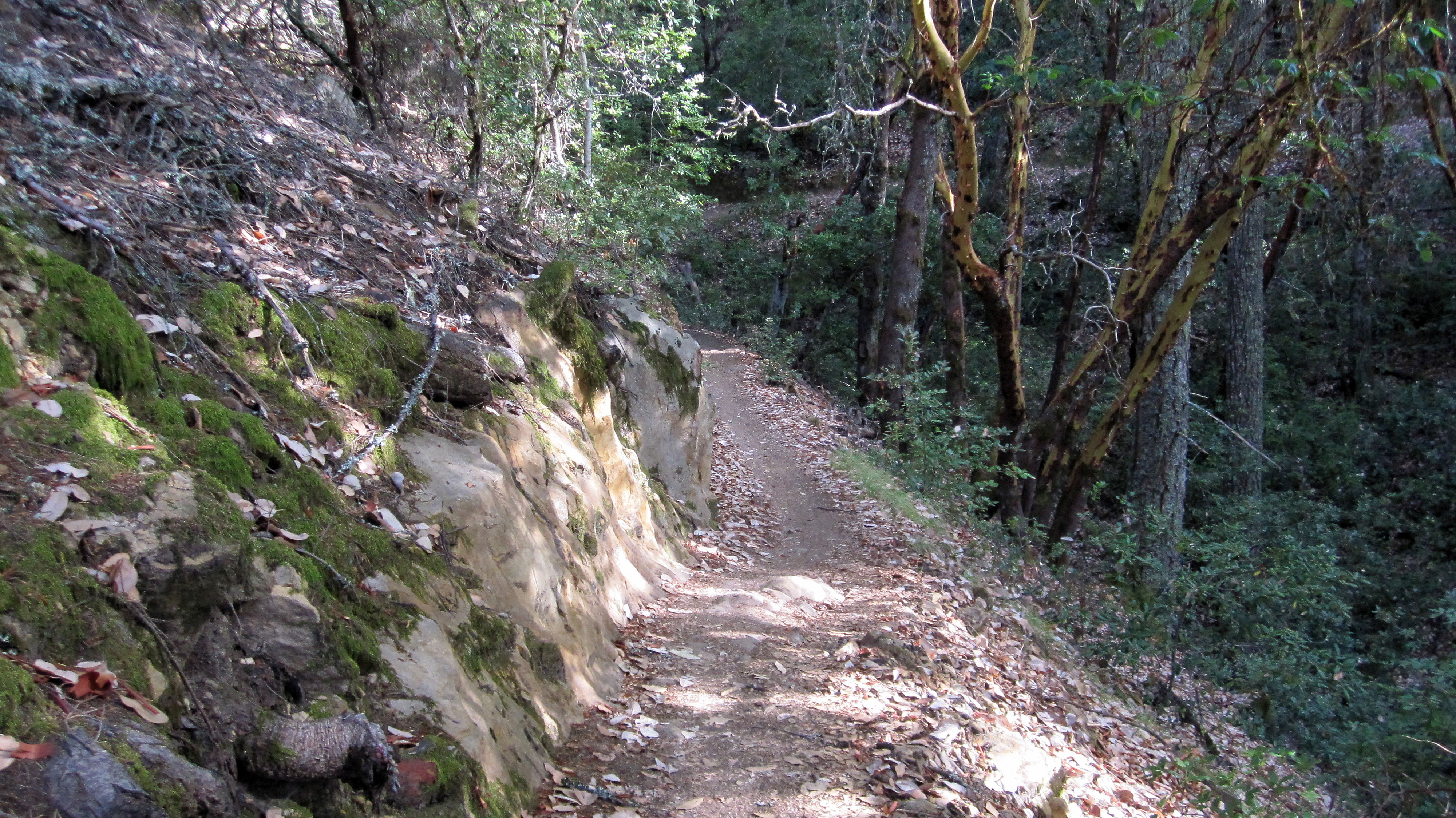 El Corte De Madera Creek trail 5