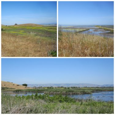 Coyote Hills Regional Park Collage 1