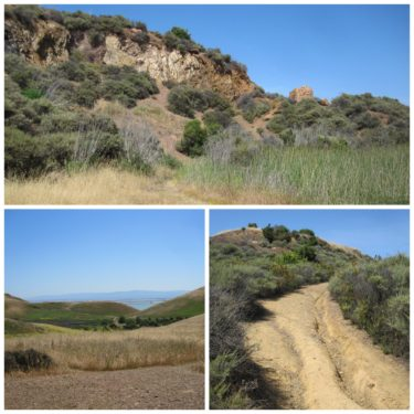 Coyote Hills Regional Park Collage 2