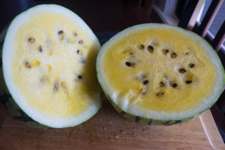yellow watermelon-2