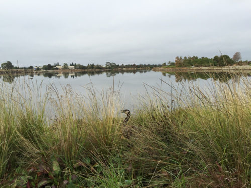 Shoreline-Baylands-2