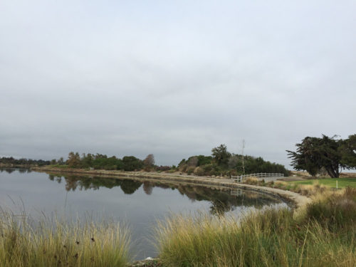 Shoreline-Baylands-3