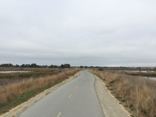 Shoreline-Baylands-5