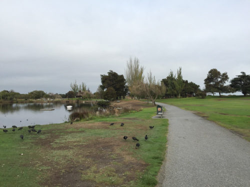 Shoreline-Baylands