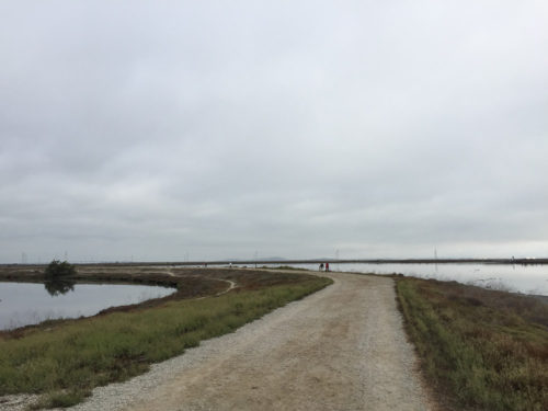 Shoreline-Baylands-6