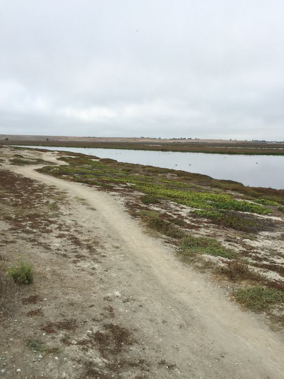 Shoreline-Baylands-9