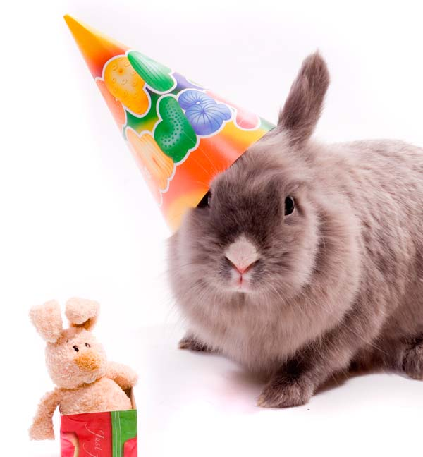 Birthday_bunny