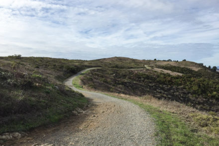 San Bruno Mountain: Eucalyptus & Saddle Loop Trails 3.78 Miles