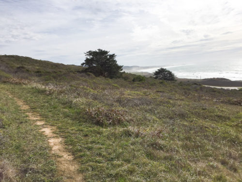 Wilburs Watch Pescadero Hike-4
